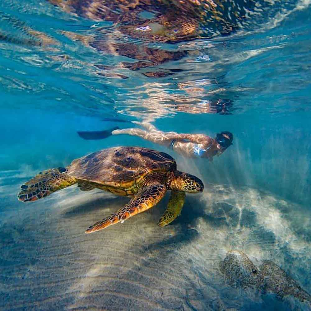 Women Swimming with Turtle In Maui
